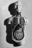 Stilllife: anatomical model by Steve Lawson, Painting, Oil on Wood
